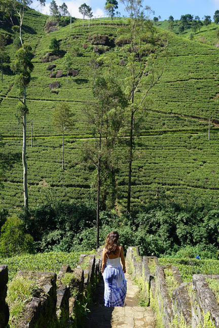 Exploring the Tea Plantations in Nuwara Eliya