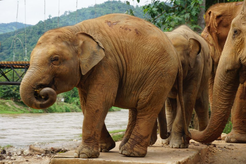 Guide to Chiang Mai, Thailand - Elephant Nature Park
