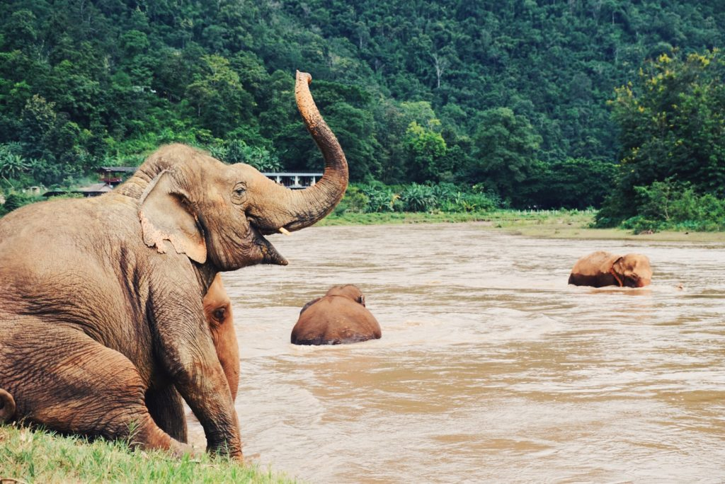 Chiang Mai Guide - Elephant Nature Park - Visit the Elephants