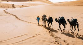 Camels at sunset in Merzouga - Erg Chebbi dunes