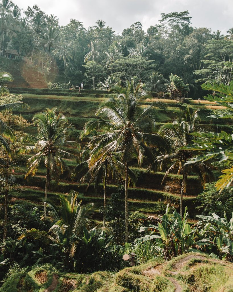 tegalalang rice terrace: guide to ubud