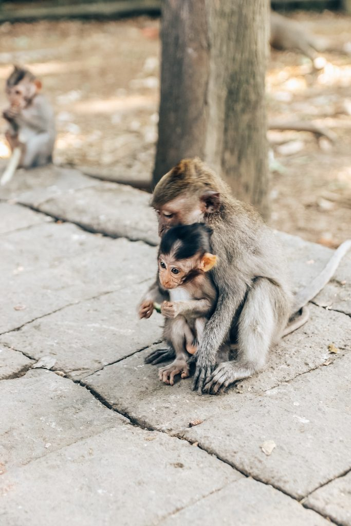 guide to ubud: a visit to monkey forest