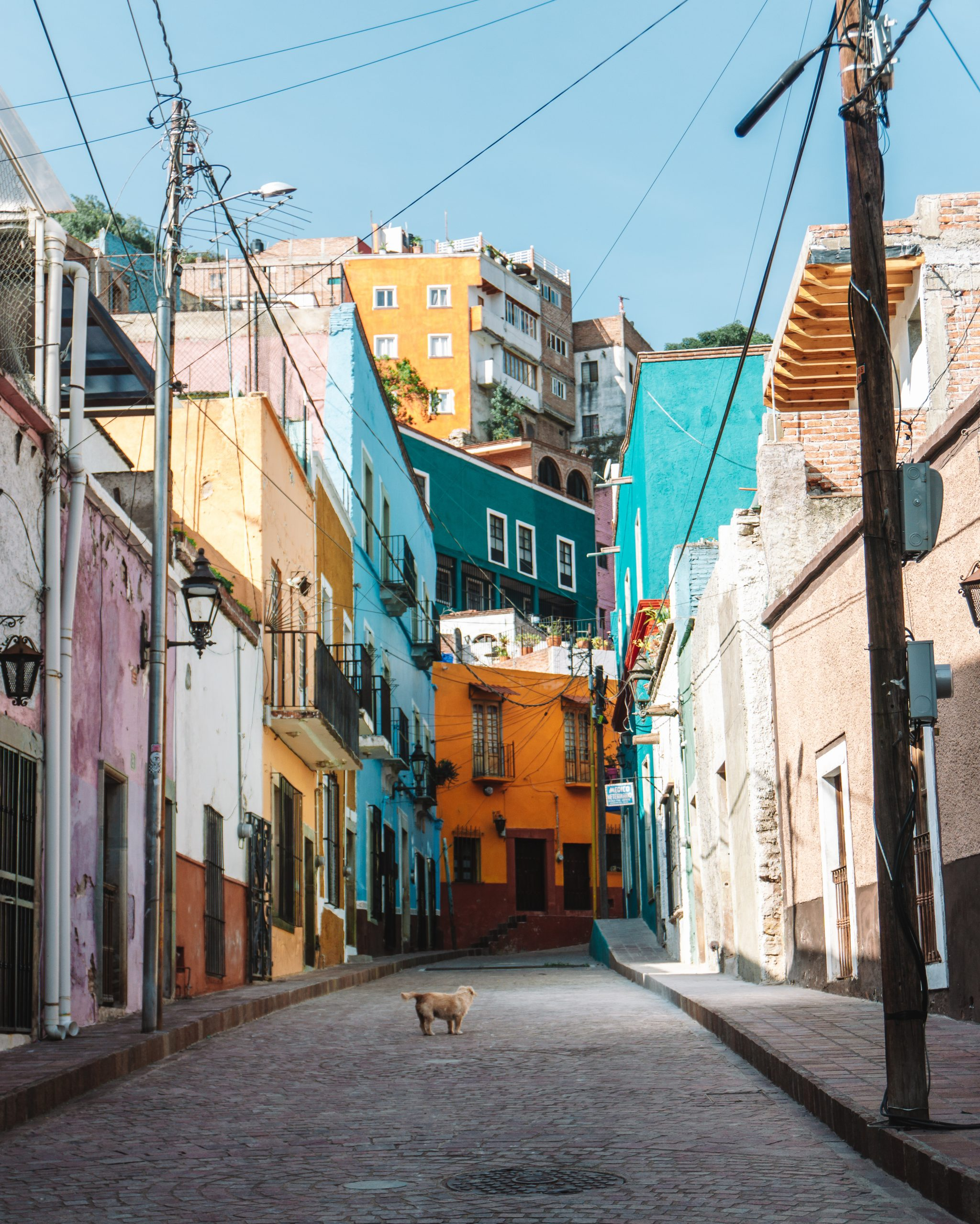 Dog on colorful street