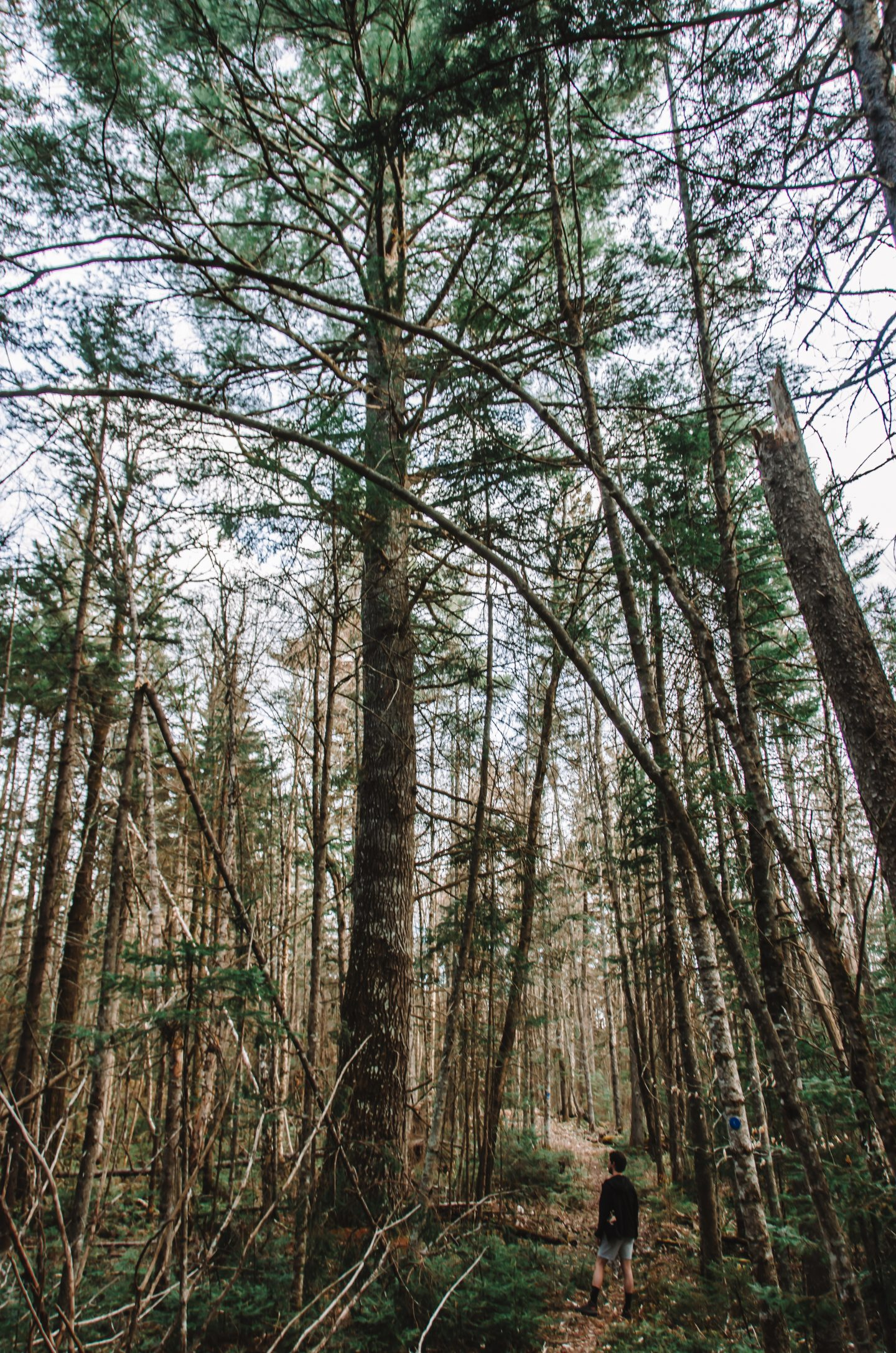 man stands in front of tall trees in Siamese Ponds Wilderness in the Adirondacks in Upstate NY