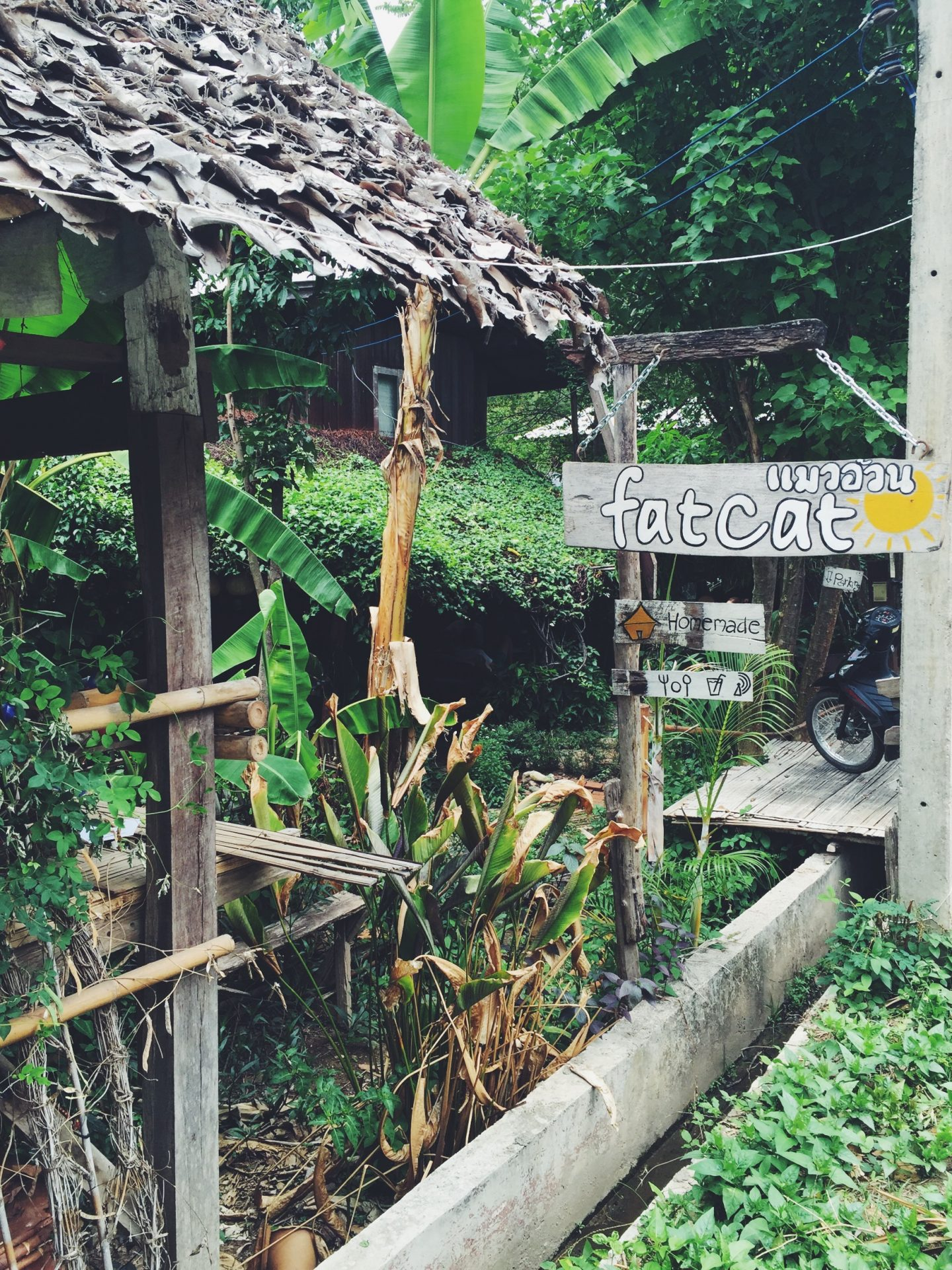 fat cat - where to eat in pai thailand